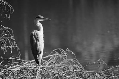 Photograph - Friends Of The Nature by Miguel Winterpacht