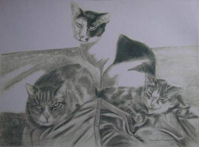 Drawing - Friends by Sandra Muirhead