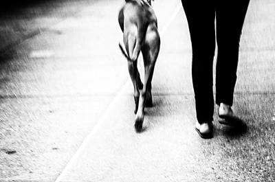 Photograph - Friends Stepping Out by Karol Livote