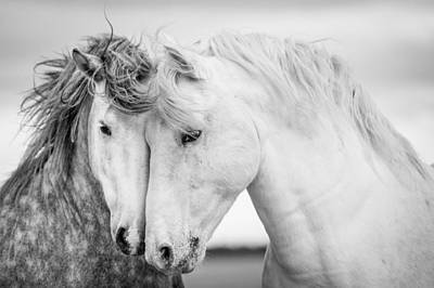 Black Horse Photograph - Friends V by Tim Booth