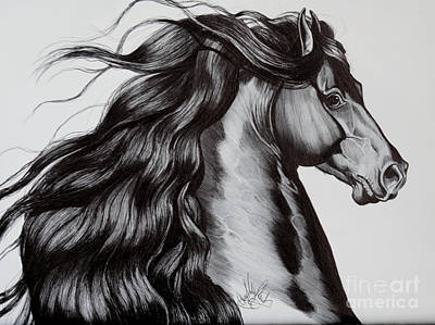 Ink Drawing Drawing - Friesian Head Shot by Cheryl Poland