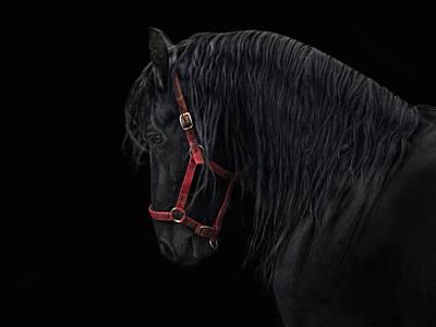 Friesian Photograph - Friesian Stallion by Joachim G Pinkawa