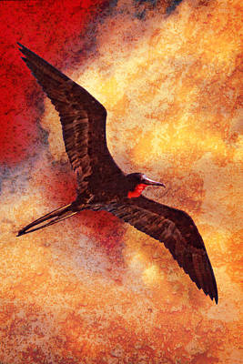 Photograph - Frigate Bird  by Bob Coates
