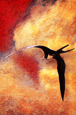 Photograph - Frigate Bird Number Two by Bob Coates