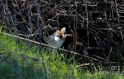 Photograph - Frightened Feral Calico  by Susan Wiedmann