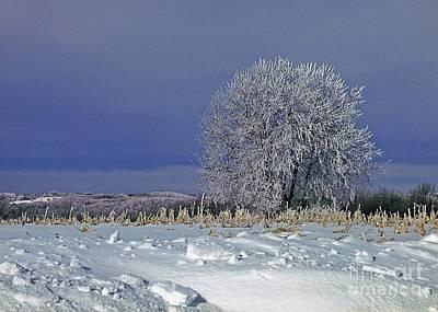 Photograph - Frigid Beauty by Christian Mattison