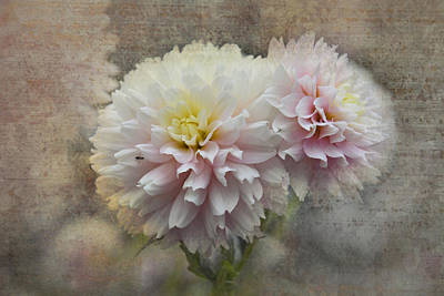 Photograph - Filoli Frills N Pink by Patricia Dennis