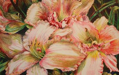 Day Lily Drawing - Frilly Pinks by Barbara Ebeling