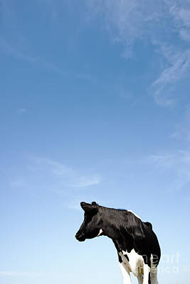 Industry Photograph - Frisian Cow. by Jan Brons