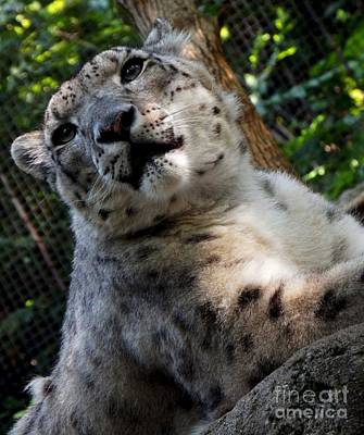 Pittsburgh Zoo Photograph - Frisky by Chad Thompson