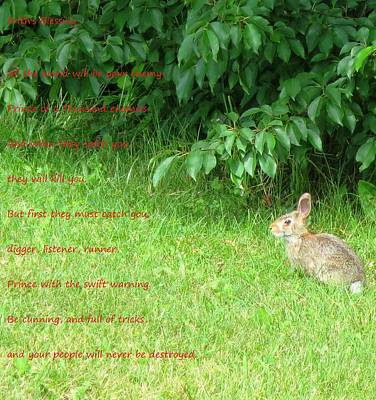 Rabbit Photograph - Frith's Blessing by Jennifer Fliegel