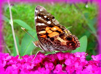 Photograph - Fritillary Butterfly  by Kim Galluzzo Wozniak