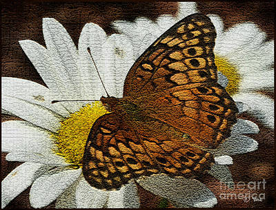 Photograph - Fritillary Variegated / Butterflies by James C Thomas