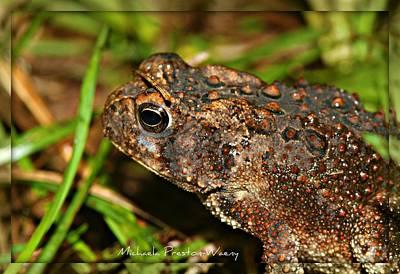 Photograph - Frog 2 by Michaela Preston