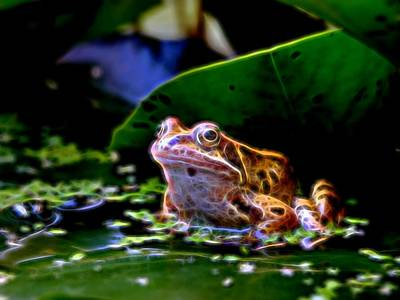 Photograph - Frog 2 by Ron Harpham
