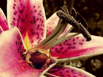 Frog Photograph - Frog And Flower by Sarah Pemberton