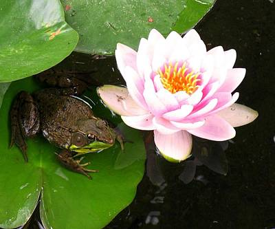 Photograph - Frog And Lily by Debbie Finley