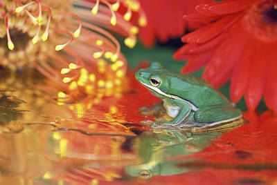Frog Photograph - Frog And Reflections Among Flowers by Jaynes Gallery