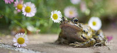 Frog And The Daisy  Art Print by Tim Gainey