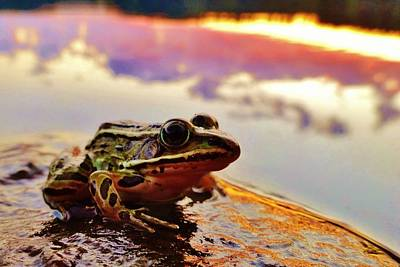 Photograph - Frog At Sunset 2 by Sarah Pemberton