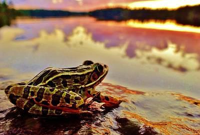 Wildlife Photograph - Frog At Sunset by Sarah Pemberton