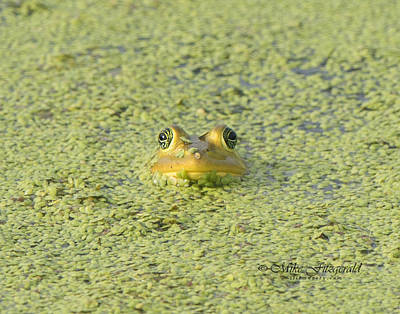 Photograph - Frog Camo by Mike Fitzgerald