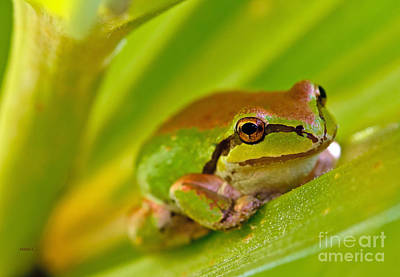 Frog Close Up 3 Art Print