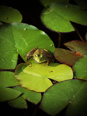 Photograph - Frog Days by Holly Blunkall