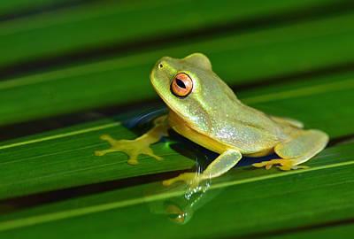 Frog Eye Reflection Art Print