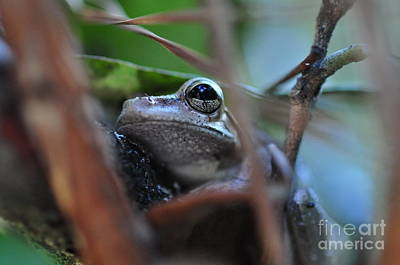 Tree Frog Photograph - Frog Eye Tree Hidden by Wayne Nielsen