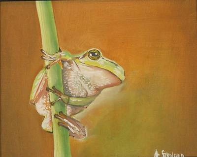 Lilly Pond Painting - Frog Hanging by Alfred Stringer