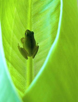 Photograph - Frog In Blankie by Faith Williams
