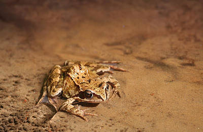 Photograph - Frog In Crystal Clear Water by Dreamland Media