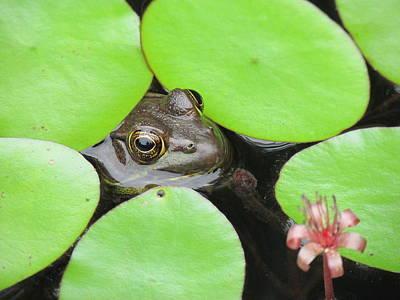 Lamborghini Cars - Frog in Lillies in water by Toni and Rene Maggio