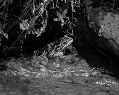Photograph - Frog In Mountain Stream by Ben Upham III