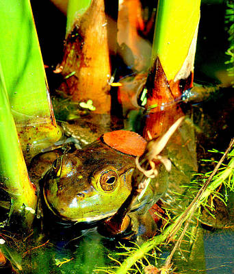 Photograph - Frog In Pond by Caroline Stella