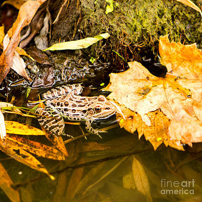 Photograph - Frog In Water 3 Of 3 by Brad Marzolf Photography