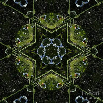 Photograph - Frog Kaleidoscope by Cindi Ressler