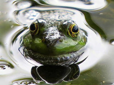 Frog Kiss Art Print by Dianne Cowen