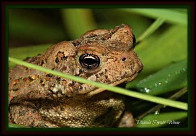 Photograph - Frog by Michaela Preston