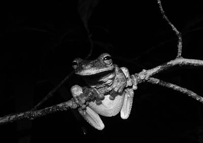 Frog Photograph - Frog Night by Sarah Pemberton