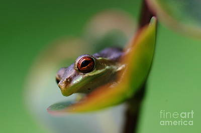 Photograph - Frog On A Leaf by Don Youngclaus