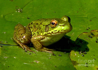 Frog On A Lily Pad Art Print by Inspired Nature Photography Fine Art Photography
