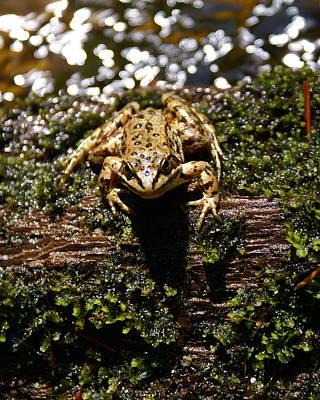 Photograph - Frog On A Log 2 by Ben Upham III