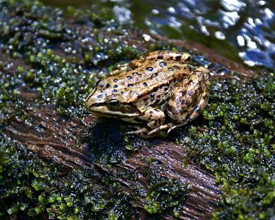 Photograph - Frog On A Log 3 by Ben Upham III