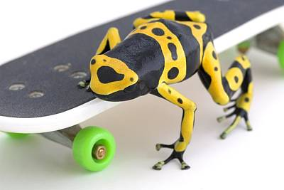 Animals Photos - Frog On A Skateboard by Corey Hochachka