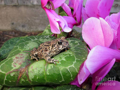 Frog On Cyclamen Plant Art Print by Debra Thompson