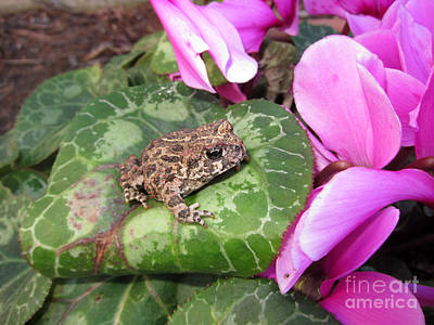 Photograph - Frog On Leaf by Debra Thompson