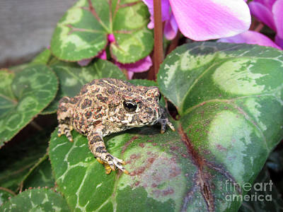Photograph - Frog On Plant Leaf by Debra Thompson