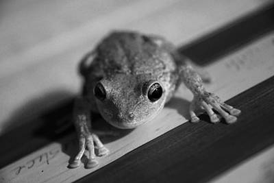 Photograph - Frog On The Front Porch by Daniel Woodrum